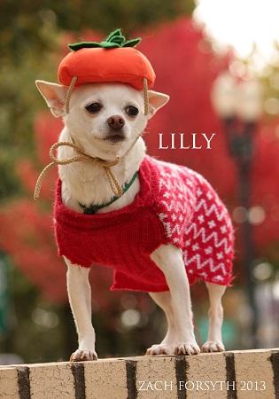 lilly pumpkin hat