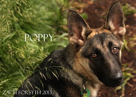 poppy 1 1