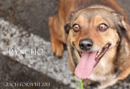 pancho 1 1