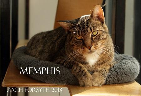 memphis 1
