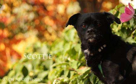 Scottie 1