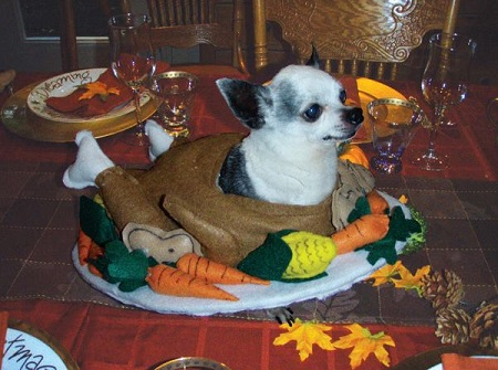 Odie Thanksgiving