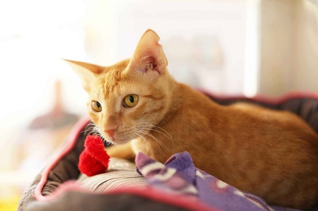 Omani Kittens 2