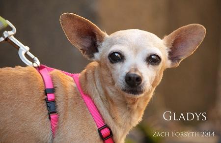 Gladys 2