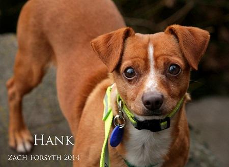 Hank 1