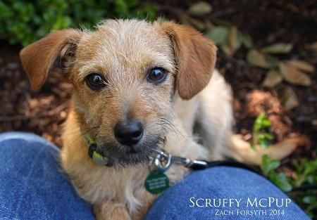 Scruffy McPup 1