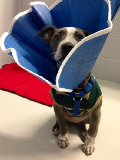 pixie care clinic recovering dog