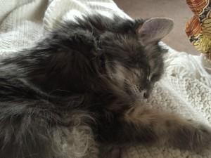 Ophelia sleeping