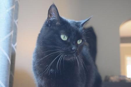 Chloe4