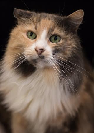 Olive cat