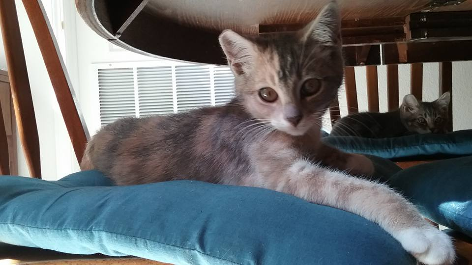 Trixie 3