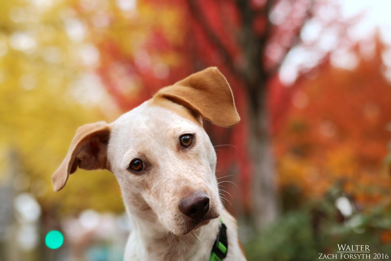 walter-healer-dog-1