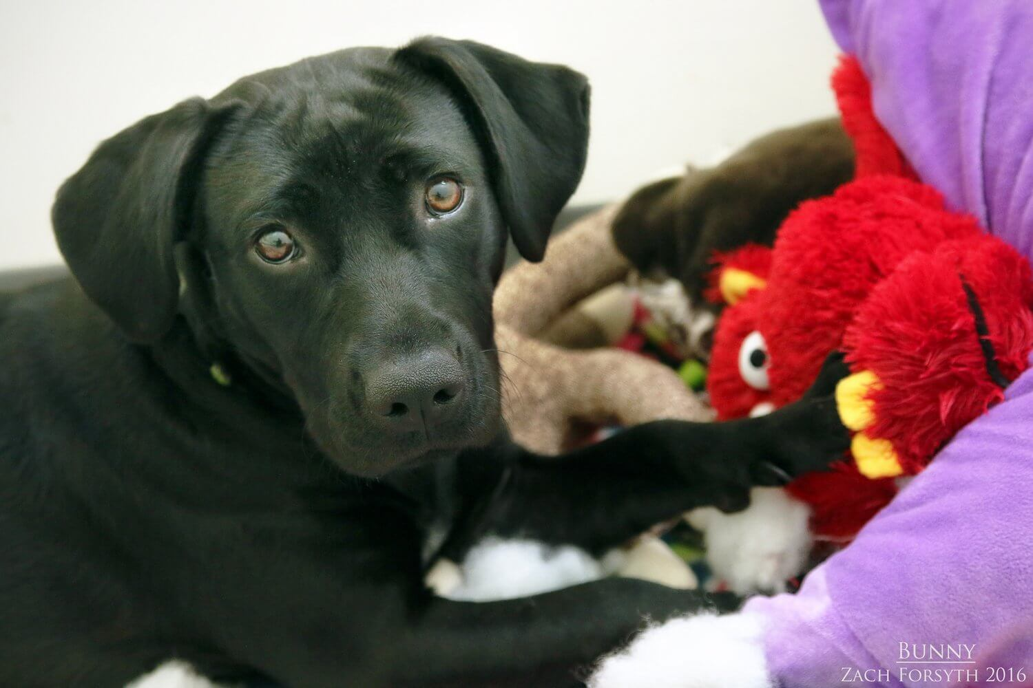 bunny-lab-pup-pic-3
