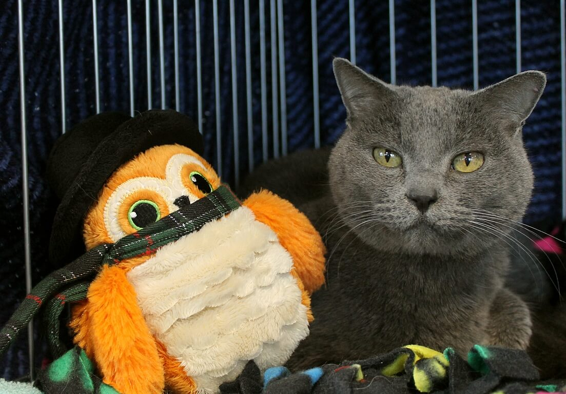 The Pixie Project Cats Non Profit Animal Shelter And